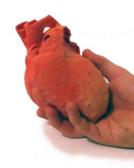 A 3D printed human heart held in a doctor's hand