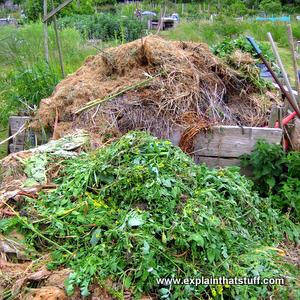Waste organic material on an allotment compost heap