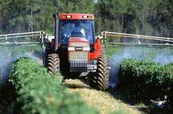 Photo of red tractor spraying crops with pesticide or insecticide.