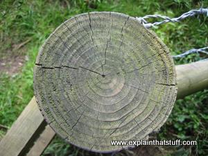 A fence pole with the annual growth rings of the tree clearly visible.