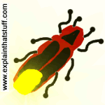 Artwork of a firefly with its abdomen lit up.