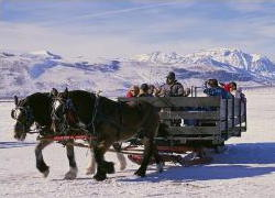 People traveling on a horse sleigh through snow