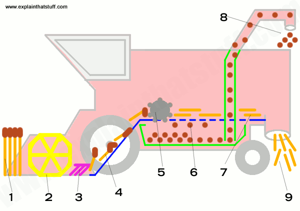 How a combine harvester works: a simplified, labelled diagram showing the main parts inside and the sequence in which they work.