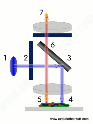 Simplified diagram showing how a fluorescence microscope makes an image.