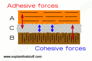 Diagram showing how adhesive and cohesive forces work in glues.