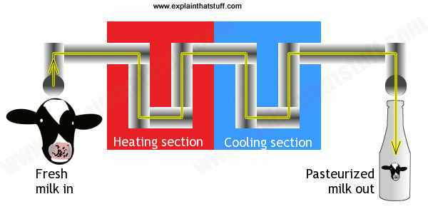 Pasteurization: diagram showing how milk is pasteurized by alternate heating and cooling.