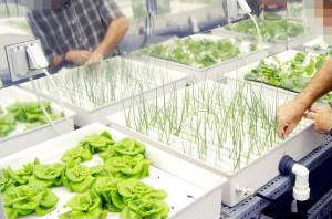 What Is Hydroponics A Simple Introduction