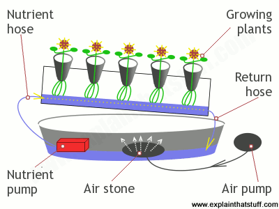 How nutrient flows past the roots of plants in the nutrient film technique.