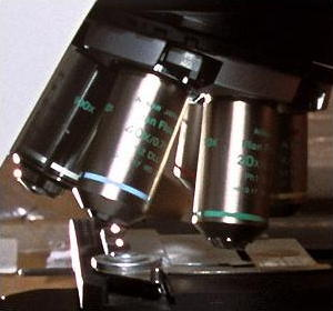 Interchangeable objective lenses on an optical microscope