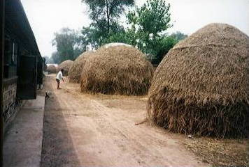 Stacks of hay waiting to be made into paper in China.