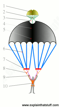 A labeled diagram showing the main parts of a parachute.