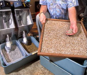 Photoelectric sorter sorting out brown and white male and female fly pupae. USDA photo.