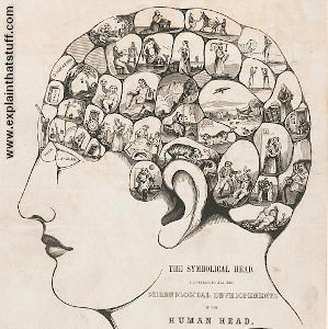 Phrenological head, left profile, by Fowler and Strachan, 1842