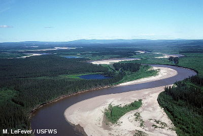 Aerial view of the Black River Yukon Flats