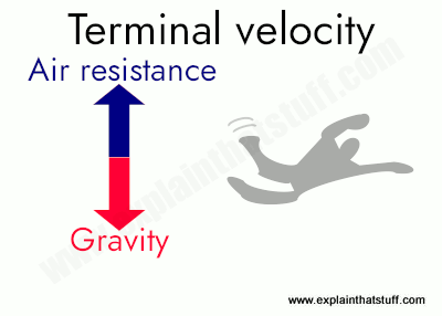 At terminal velocity, the force of gravity is balanced by the force of drag (air resistance), so you cease to accelerate.