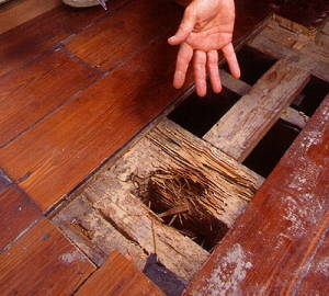 A man's hand points out serious termite damage to a wooden floor.