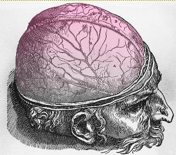 Illustration of the human brain by Jan Stephan van Calcar c.1543.